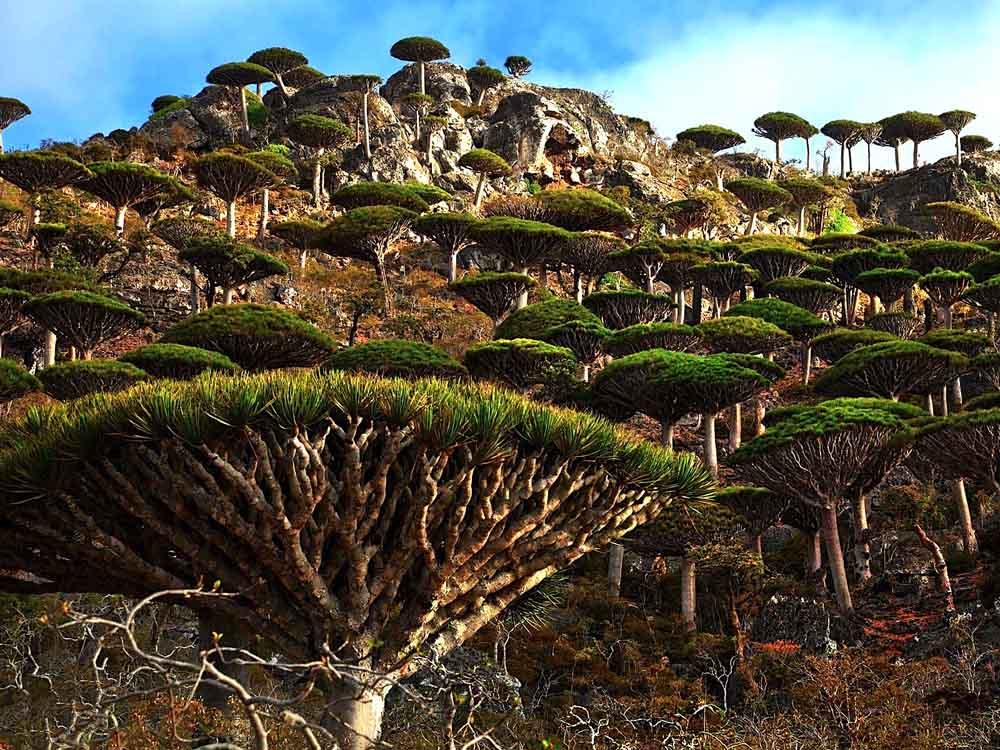 Resultado de imagem para Ilha Socotra