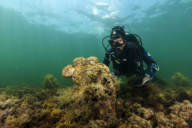 New parasite decimates giant clam species in Mediterranean