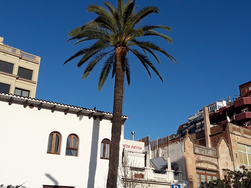 palmier à Lesseps