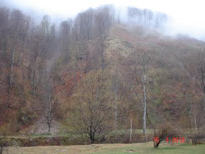 natura pe Valea Galbenei