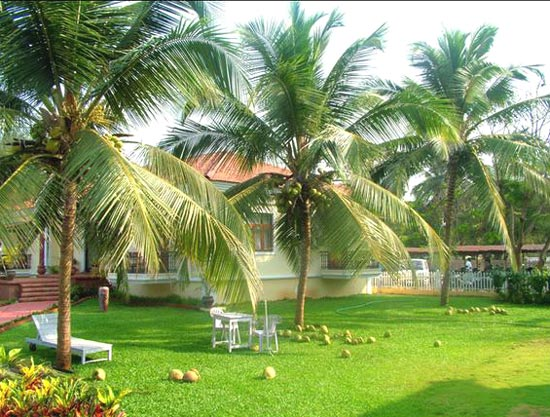 Sugavanam-Tamil-Stories-Jokes: Coconut Trees are GOD for all