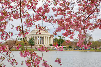 Washington-DC-Cherry-Blossom-Tidal-Basin-Thomas-Jefferson-Memorial