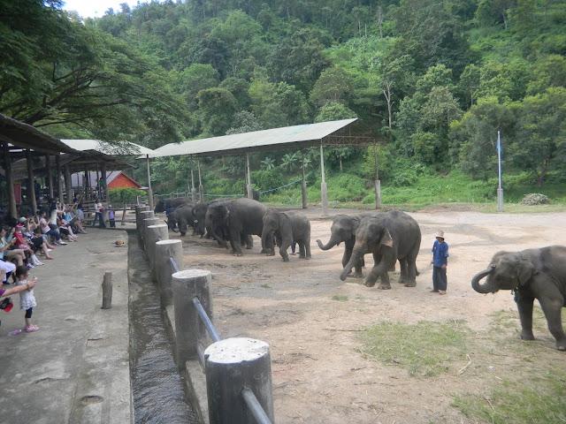 Apresentação dos Elefantes - Mae Taeng Elephant Park - Parque de Elefantes na Tailândia