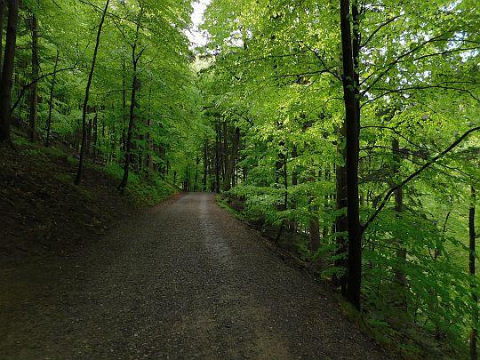 Fragment Drogi Pienińskiej w cieniu drzew.