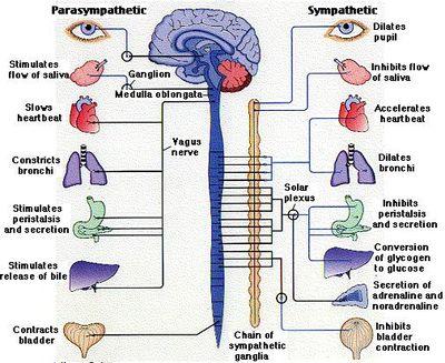 sintomas del nervio vago