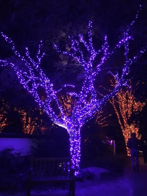Atlanta Botanical Gardens Christmas Lights Exhibit With Love