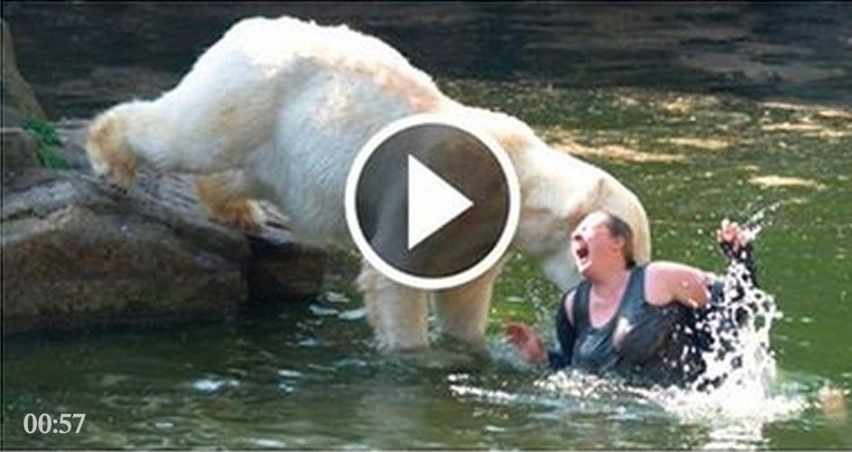 A RICHYNERO WORLD OF ENTERTAINMENT How Polar Bear