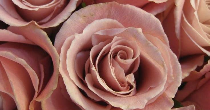 мышечная пепел розы картинки такой полной