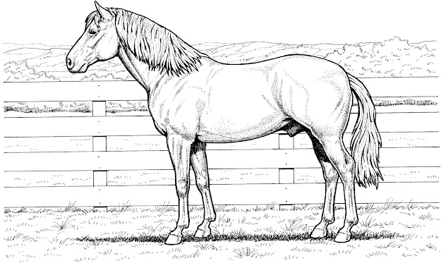 More Images Of Realistic Animal Coloring Pages