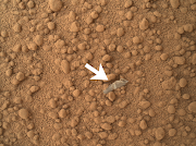 Possible Insect Husk Or Exoskeleton Found On Mars?