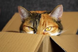 Pisicile și cutiile