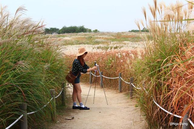 Hàn Quốc là địa điểm lý tưởng cho du khách chụp ảnh