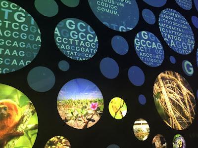 Terra - Museu do Amanhã