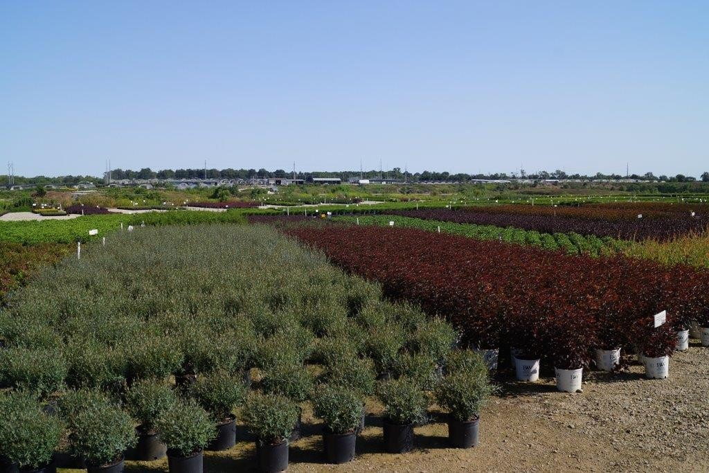 Solutions From Loma Vista Nursery Fall Color Options