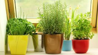 Προσελκύσετε χρήματα στο σπίτι σας τοποθετώντας αυτό το φυτό στη δεξιά πλευρά της εισόδου