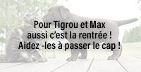 Pour Tigrou et Max aussi c'est la rentrée ! Aidez -les à passer le cap !