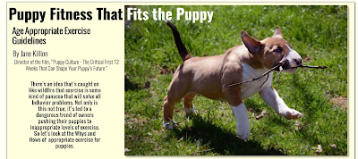 https://www.puppyculture.com/new-appropriate-exercise.html