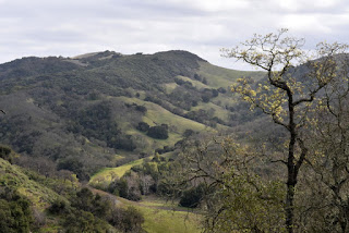 Sunlit leaves and rolling olive-green hills, Rancho Cañada del Oro Open Space Preserve, San Jose, California