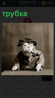 За столом сидит собака одетая и с трубкой в пасти. На голове кепка и умное выражение морды