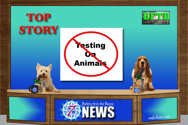 BFTB NETWoof News Top Story hosted by two dogs
