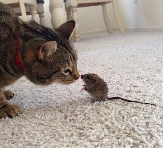 Cerpen Raja Tikus Yang Curang Karya Tedo Arifin