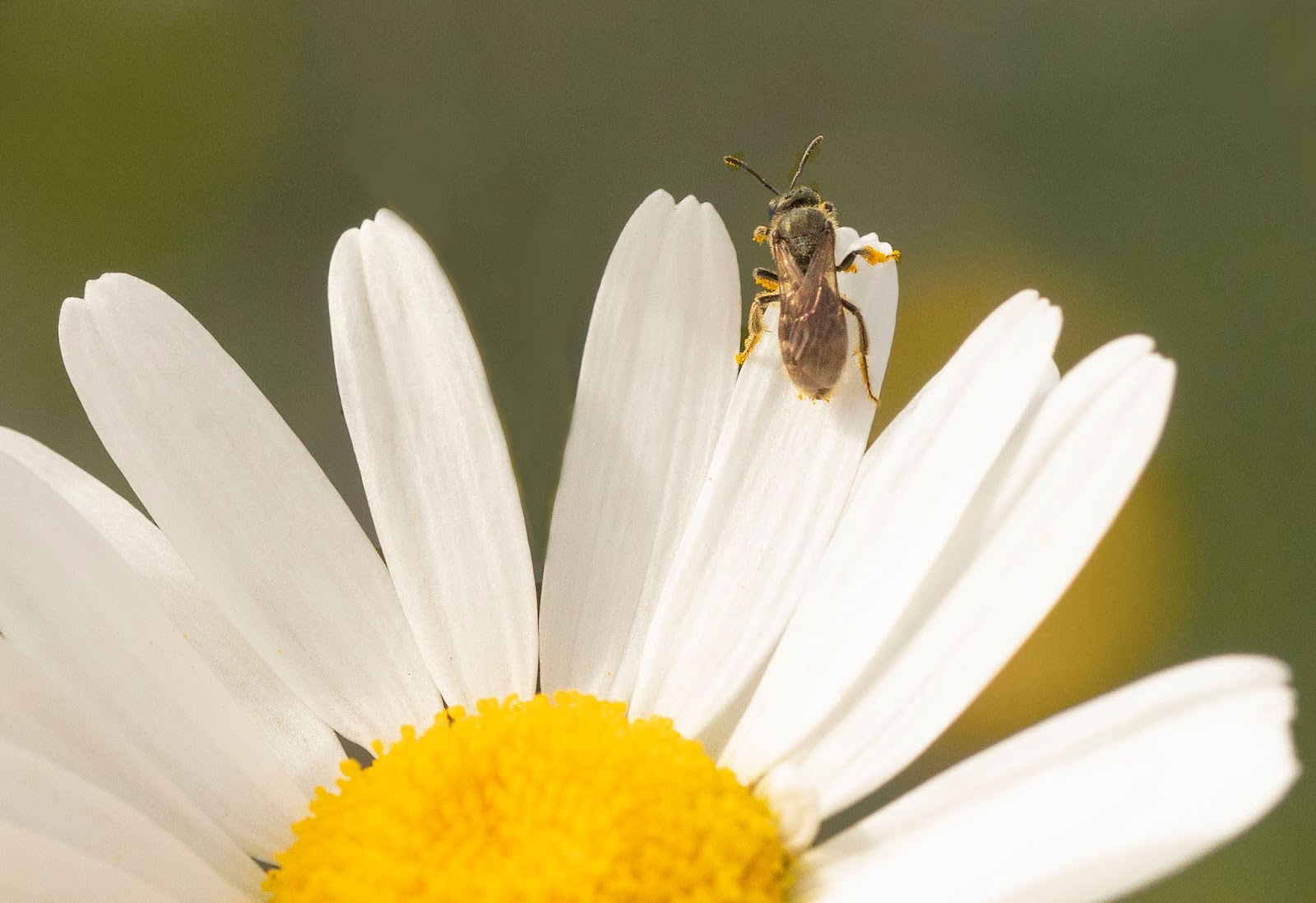 Sline Area News: Hands-On Mason Bee Fall Care seminar Saturday ... on beehive plans and designs, box house designs, food designs, bird designs, luxury pool house designs, signs designs, cat house designs,