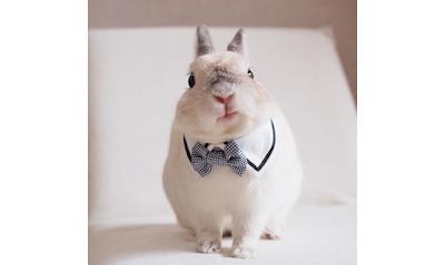 Rabbits on Instagram