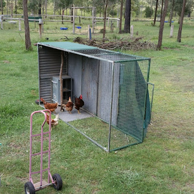 eight acres: outfoxing the fox that has been attacking our chickens