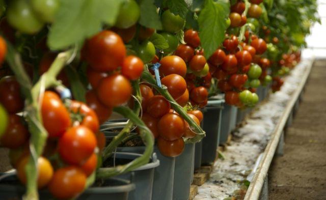 Novedades en agricultura disminuyen huella de carbono