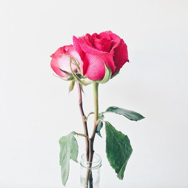beautiful-bloom-blooming-WhatsApp Status