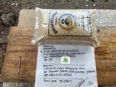 Benih pesanan HARYANTO Indramayu, Jabar..   (Sebelum Packing)