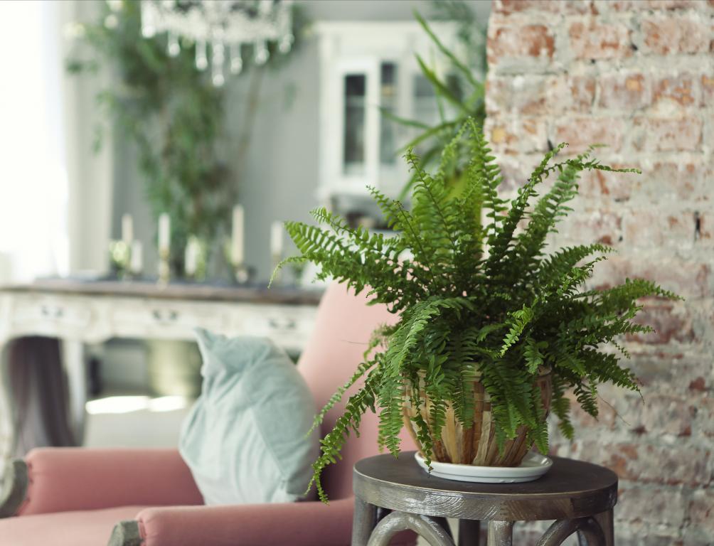 9 Φυτά Εσωτερικού Χώρου για να Καθαρίσεις την Ατμόσφαιρα του Σπιτιού σου!