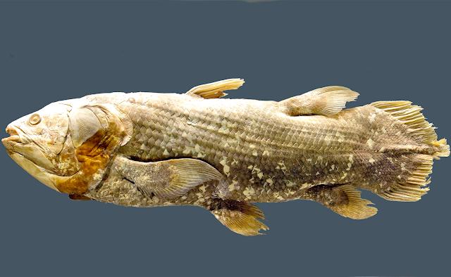 Các nghiên cứu trước đó trên hóa thạch cá chủ yếu lâm vào bế tắc