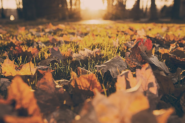 Autumnal photo - leaves on the ground, sunlight