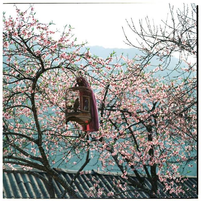 Ngoài những nét đẹp hoang sơ từ thiên nhiên, Hà Giang còn có nhiều đặc sản của dân tộc H'mông hấp dẫn du khách khi đặt chân đến đây.