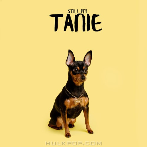 Still PM – Tanie – Single