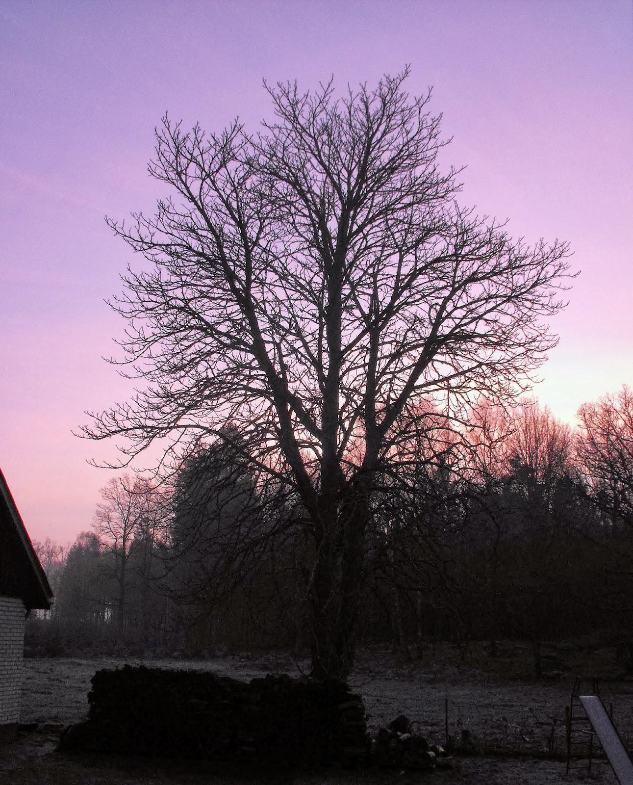 Tidig morgon, Sösdala, morgon, Vacker natur, underbart, skåne, hässleholm, livet på landet, landsbygden