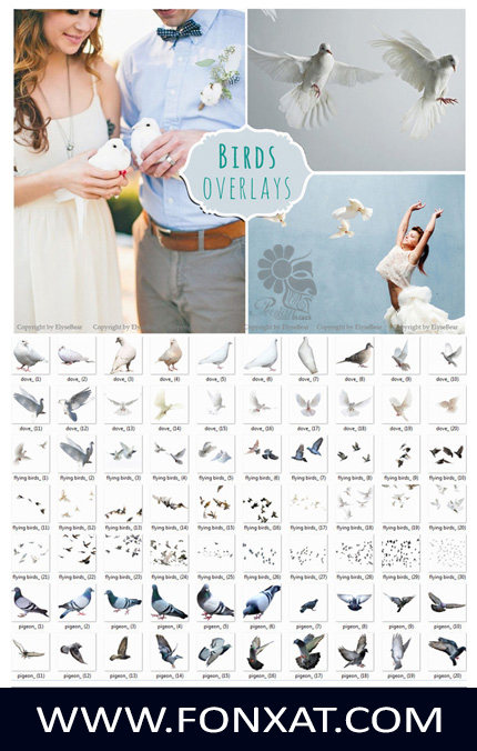 Download Images clipart design elements, pigeons