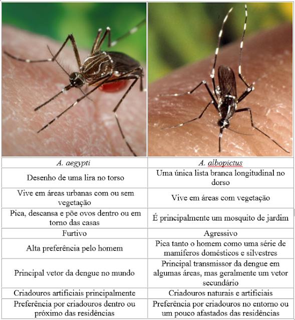 Aedes aegypti e albopictus