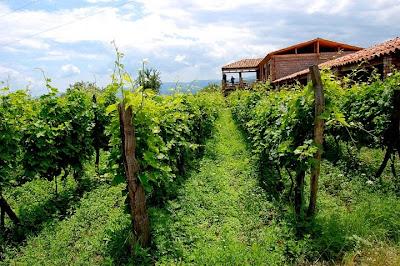 Agar Anggur Cepat Berbuah