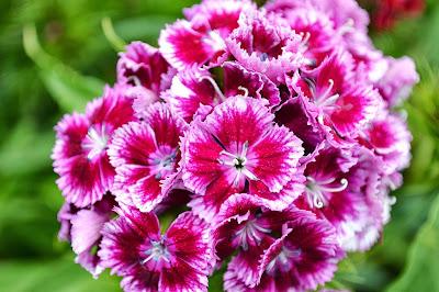 Bildergebnis für Vashon Island with the most beautiful flowers in September