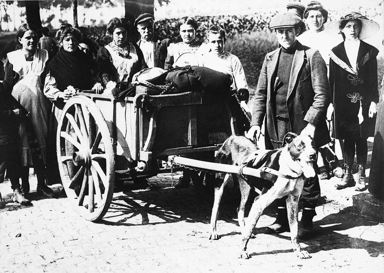 Belgian refugees leaving Brussels, their belongings in a wagon pulled by a dog, 1914.