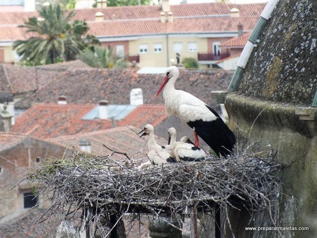 cigüeñas en Trujillo, algo curioso