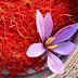 Saffron, the most expensive spice grown in Albania