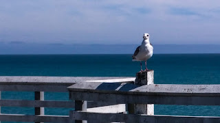 a seagull in a different body position perched atop the safety railing on a pier