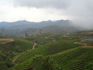 Kebun Teh Malino Highlands