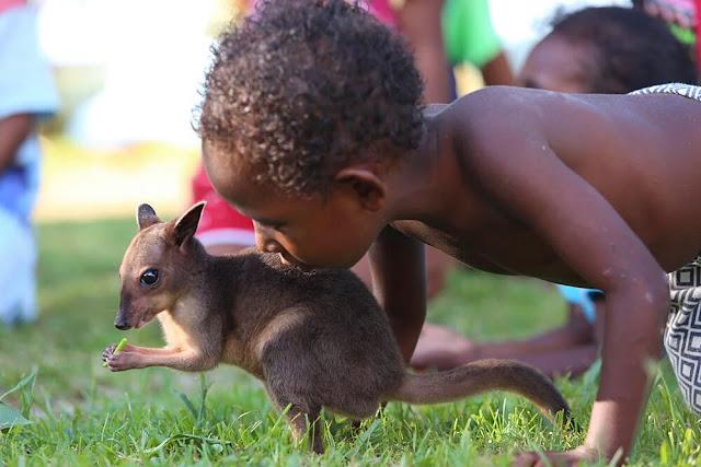 Ketika Bocah Papua bermain Anak Kanguru