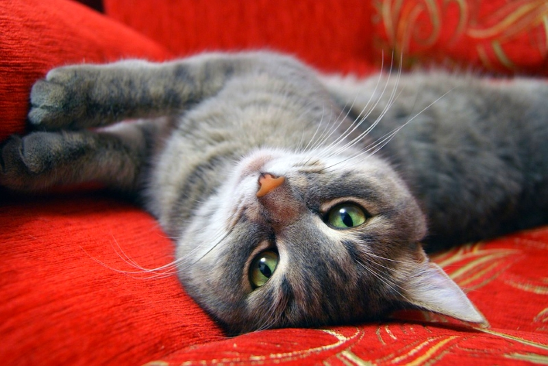 Gato deitado num sofá