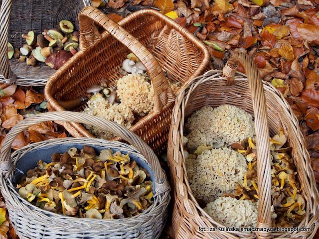 na grzyby, grzyby gatunkami, kosze pelne grzybow, pieprzniki trabkowe, siedzun sosnowy, podgrzybki, jesien
