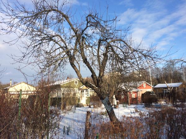 talviset_puut